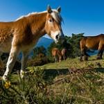 Nacionalni park Urkiola u Španiji