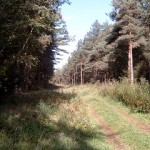 Šumski put